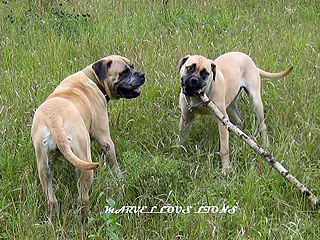 Маня и Агата