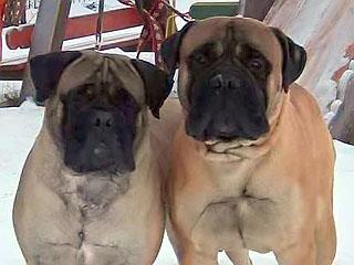 Тина и Ваня