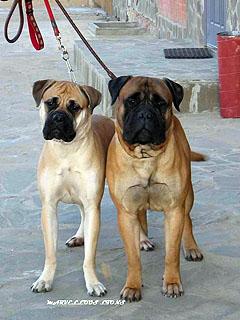 Ваня и Агата